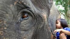 Przytulanie słonia pomaga dzieciom
