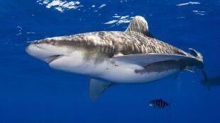 Łowił ryby, złapał rekina. Drapieżnik ugryzł wędkarza w rękę