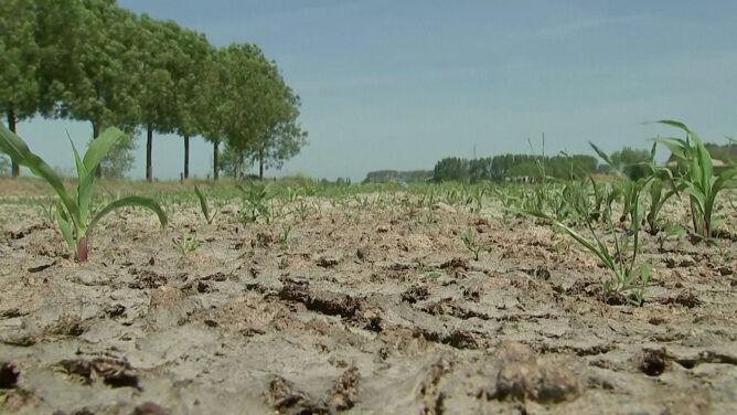 Tak źle nie było od 120 lat. Belgia zmaga się z suszą