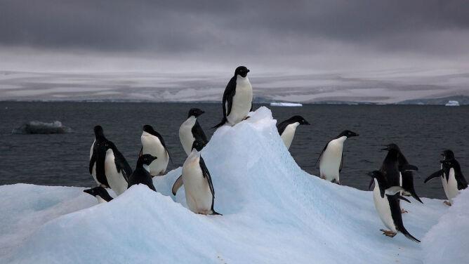 Odkryto, jak długo istnieje 1,5-milionowa kolonia pingwinów