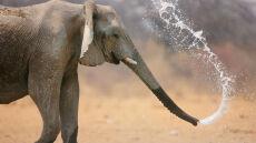 Tysiąc żołnierzy na straży kilkuset słoni