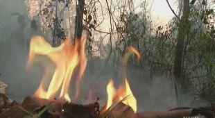 Płoną lasy Boliwii